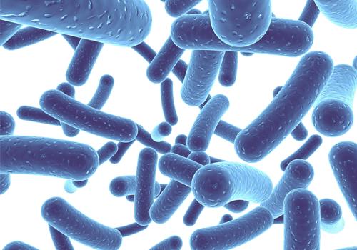 Probiotics uống diệt vi khuẩn hp được không