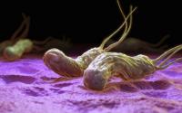 viêm dạ dày vi khuẩn hp