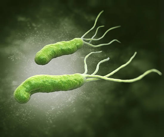 Sữa chua có khả năng kìm hãm sự phát triển của vi khuẩn HP